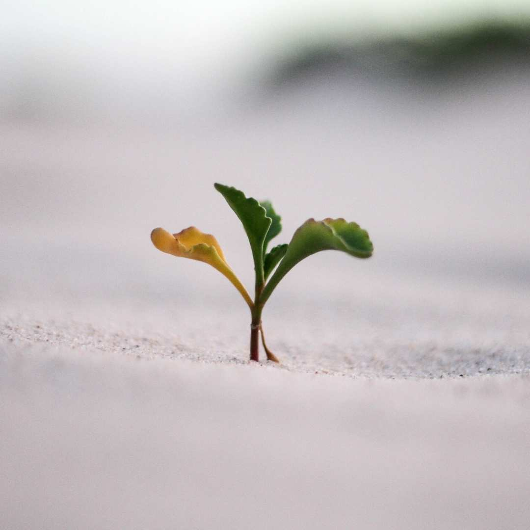 Simple Ways to grow your business